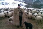 cioban cu oi