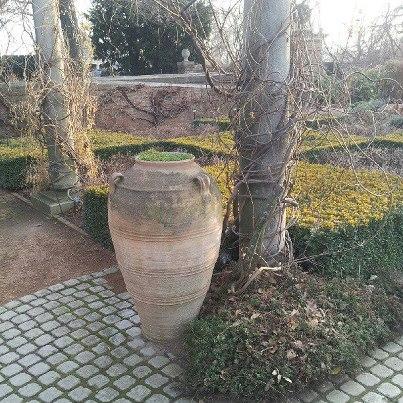 rodiagnusdei pot botanical garden 1