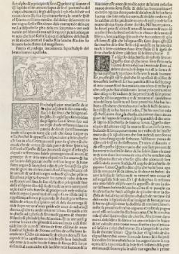Douce 244 Italian Revelation