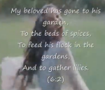 Song of songs2
