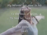 Song of songs 3