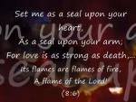 Song of songs4