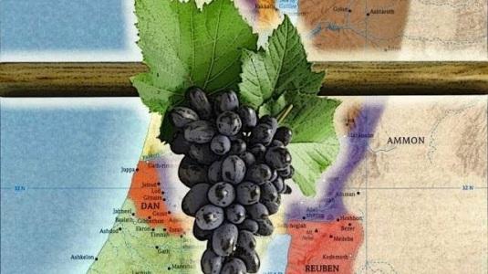 Israel vine