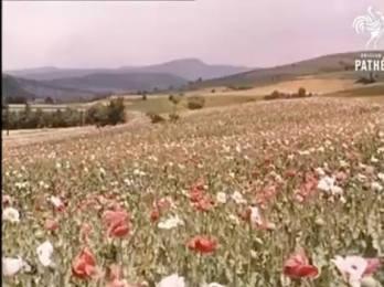 Romanian vintage film