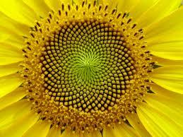 Sirul lui FIbonacci Fibonacci sequence
