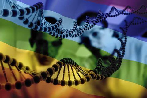 gay gene