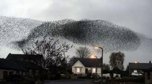 starlings-dylan-winter-in-voiajul-sau-cu-barca-in-jurul-insulei-britanice-in-2010-grauri